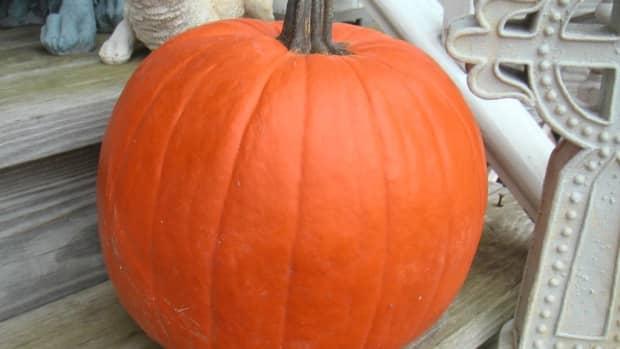 pumpkin-pie-from-real-pumpkins