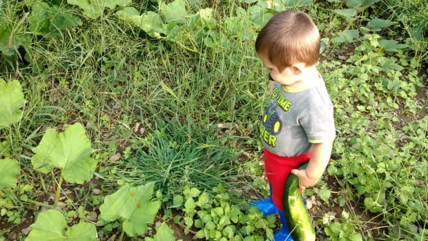 variations-of-salad-cooking-with-kids