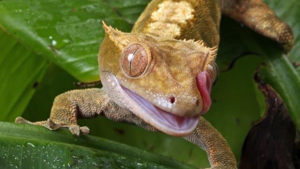 best-pet-reptiles-for-beginners