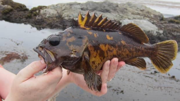best-rockfish-lures