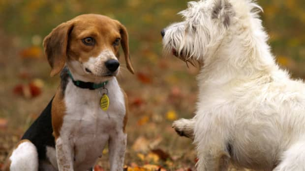 why-socializing-with-other-dogs-is-more-important-than-you-think