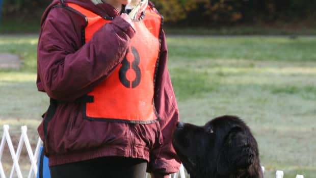 attention-training-for-your-pup