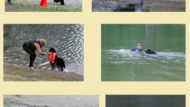 starting-a-puppy-in-water-work