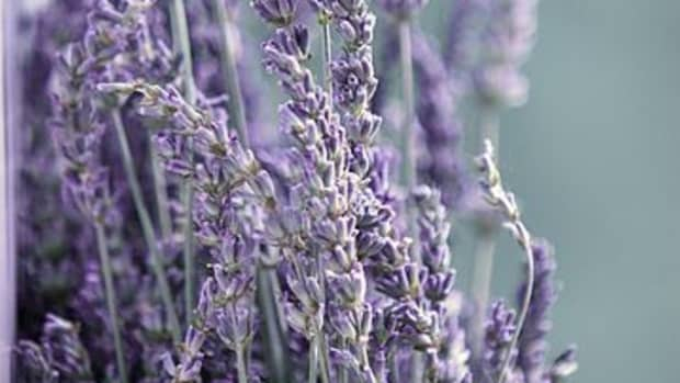 uses-and-benefits-of-lavender-essential-oil