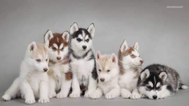ten-reasons-why-you-shouldnt-get-a-puppy