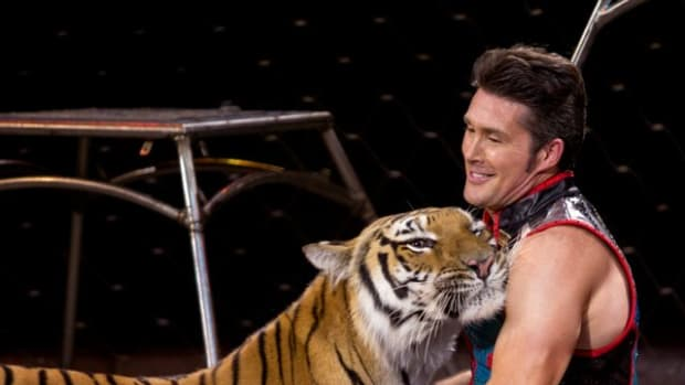 alexander-lacey-big-cat-trainer-and-animal-lover