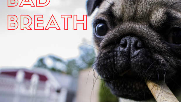 how-to-help-your-dogs-bad-breath