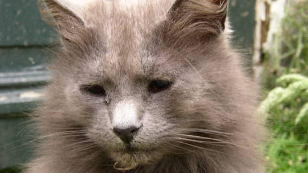 blind-cat-inside-or-outside