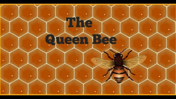 the-life-of-the-queen-bee-in-the-honey-bee-hive