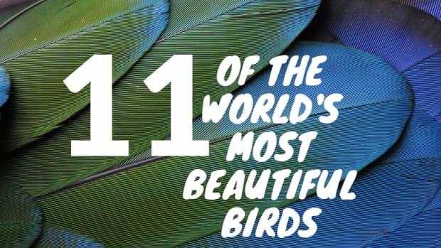 worlds-most-beautiful-birds