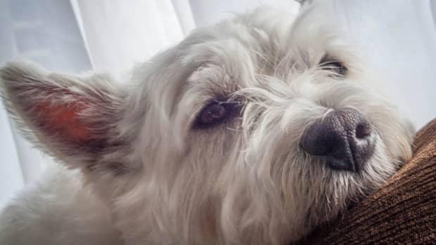 sad-dog-left-alone
