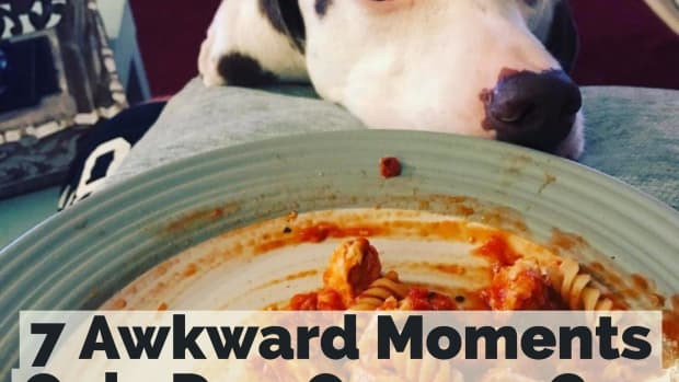 7-awkward-moments-only-dog-owners-can-relate-to