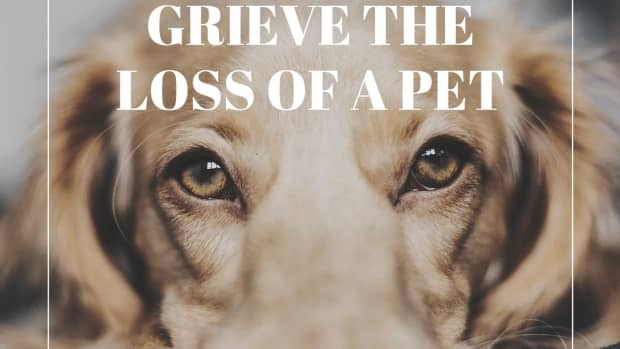why-its-ok-to-grieve-a-pet-even-when-you-have-lost-family-members