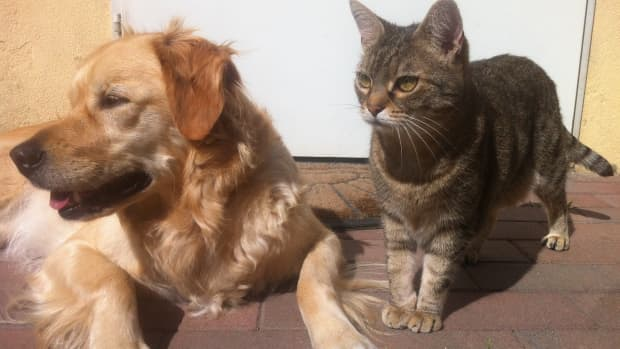 the-positive-health-benefits-of-having-pets-are-pets-good-for-your-health