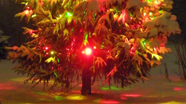 lonesome-little-christmas-tree