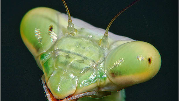 bugs-close-up-and-why-we-should-be-glad-theyre-small