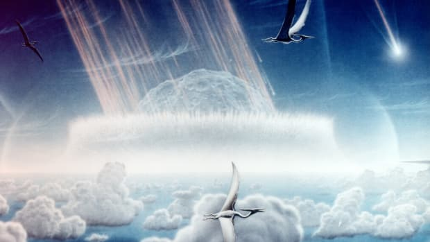 why-do-scientists-think-we-are-in-a-sixth-mass-extinction