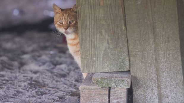the-beloved-boardwalk-cats-of-atlantic-city