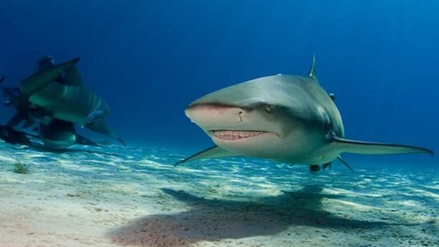 sharks-are-not-that-dangerous
