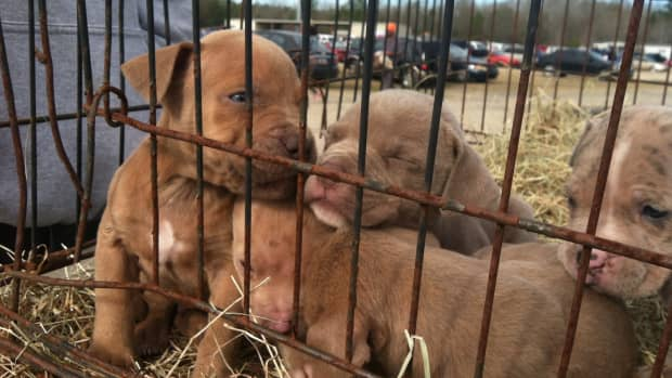 us-cities-where-pet-stores-are-required-to-sell-rescue-dogs-only