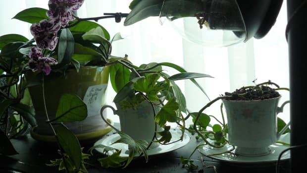 mad-hatter-flower-pot-an-easy-diy