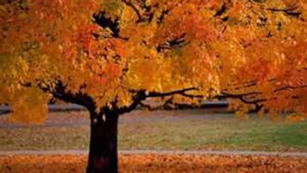 autumn-a-fall-poem