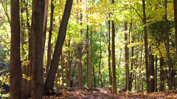 fall-scenes-a-photo-essay