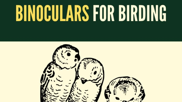 birding-the-complete-guide-to-choosing-and-using-binoculars