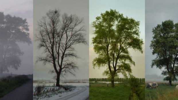 seasons-poem-sestina