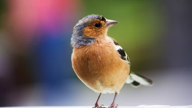 do-birds-make-good-pets