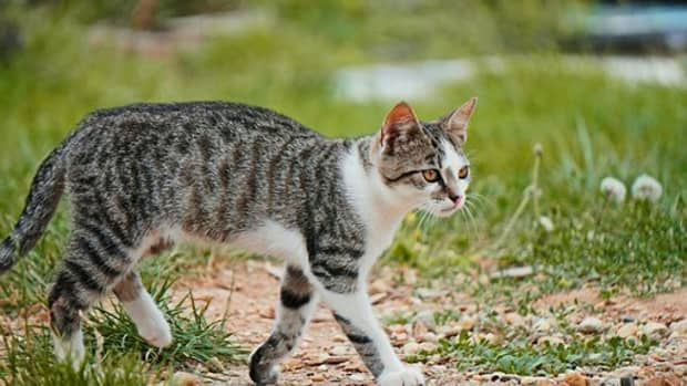 15-astronomical-names-for-your-cat