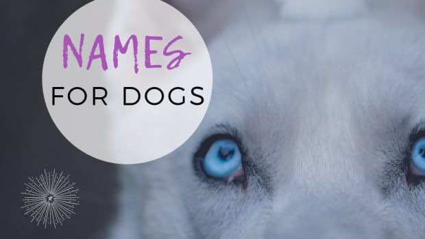 15-astronomical-names-for-your-dog