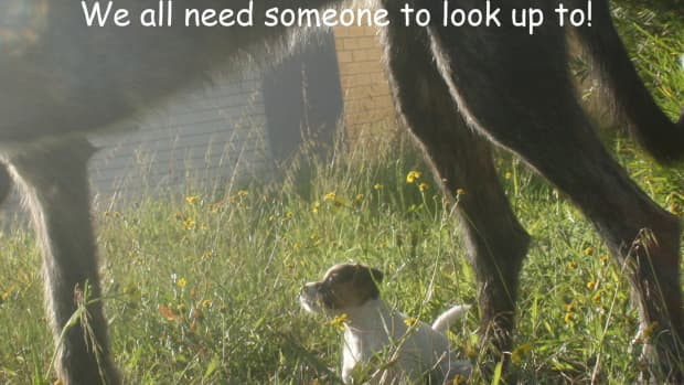are-you-furreal-maddog-memes-puppy-ponderings-dog-tail-tales