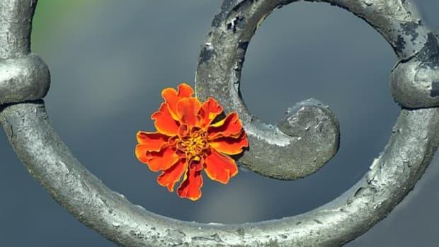 spiral-a-poem