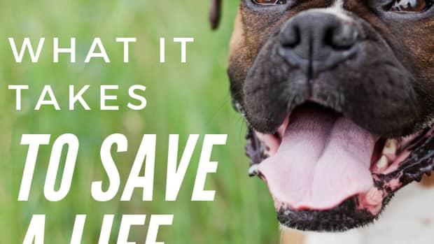 the-underground-world-of-animal-rescue