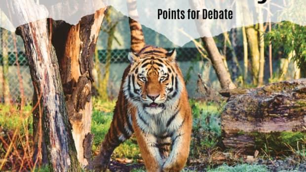 debate-topic-exotic-pets-should-be-legal