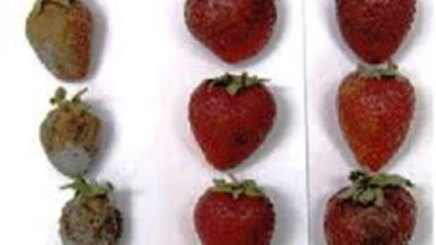 ediblefilms-whyunwrapthefoodwhenyoucaneatthem