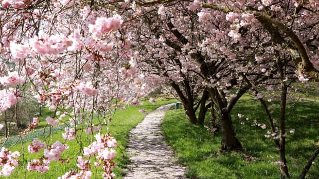 6-best-hidden-parks-in-budapest-according-to-locals