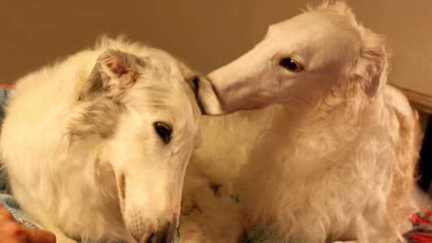 15-unique-russian-names-for-your-borzoi-from-slavic-mythology