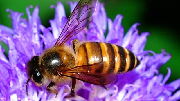 pollination-bees-flowers-and-plants