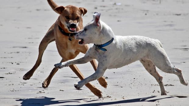 tips-to-use-if-your-dog-is-attacked-while-dog-walking