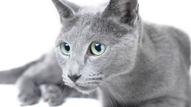 15-great-names-from-russian-and-slavic-mythology-for-your-russian-blue-cat