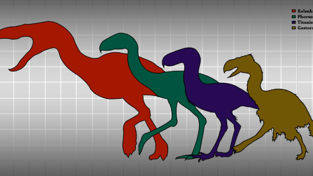 humans-do-have-natural-predatorsand-theyre-multiplying