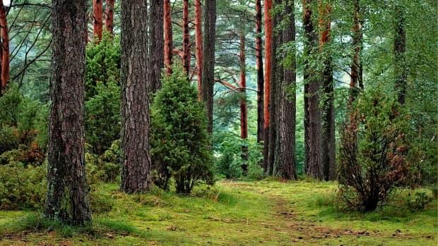 a-walk-through-the-woods