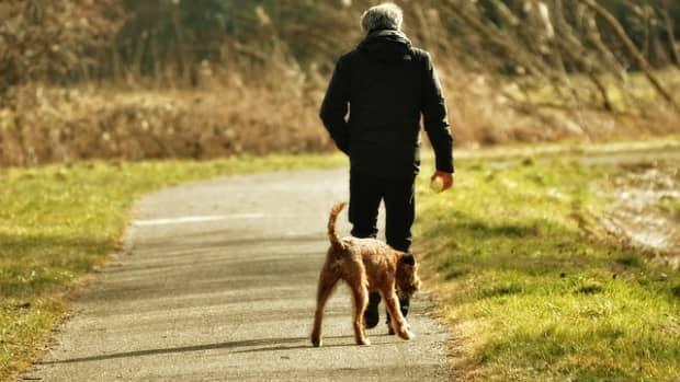 freedom-through-off-leash-dog-training