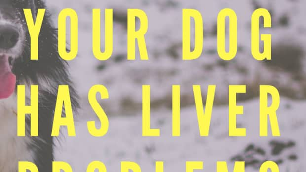 how-can-you-tell-if-your-dog-has-liver-problems