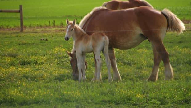 horses-in-poetry-a-poem