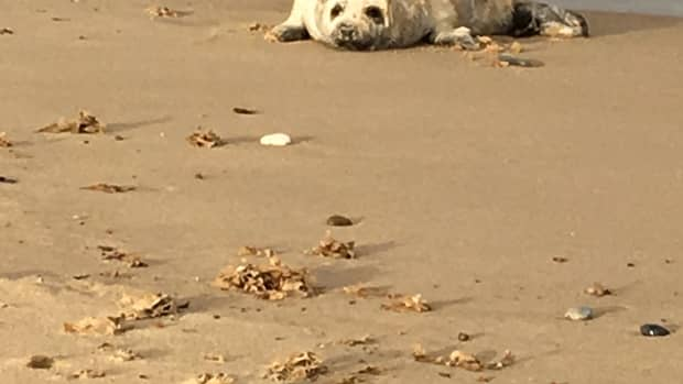 tips-on-seeing-the-seals-at-horsey-in-norfolk