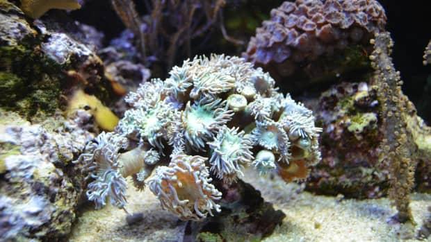 marine-sources-for-anticancer-drugs