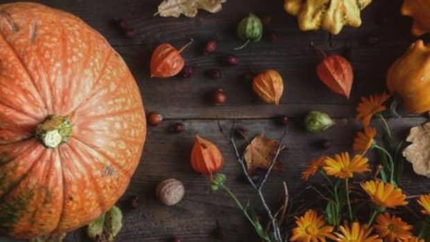 the-pumpkin-patch